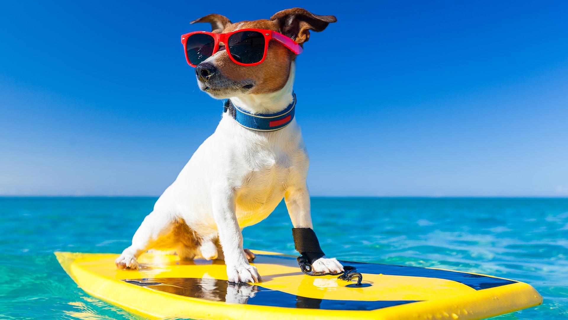 Vacaciones con tu mascota en El Campanario del Paraiso